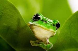 FROG-Fully Rely On God